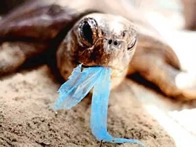 Photo Courtesy | CR4.GLOBALSPEC.COM A sea turtle with a plastic bag in its mouth.