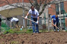 Volunteer shovels dirt in the garden near Davis Hall.